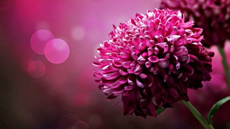 Fond Ecran Fleur Rose Focus Branche Purete Esthetique Photographie