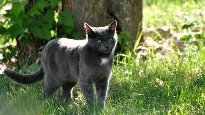 Résultats de recherche d'images pour «chat dans la foret»