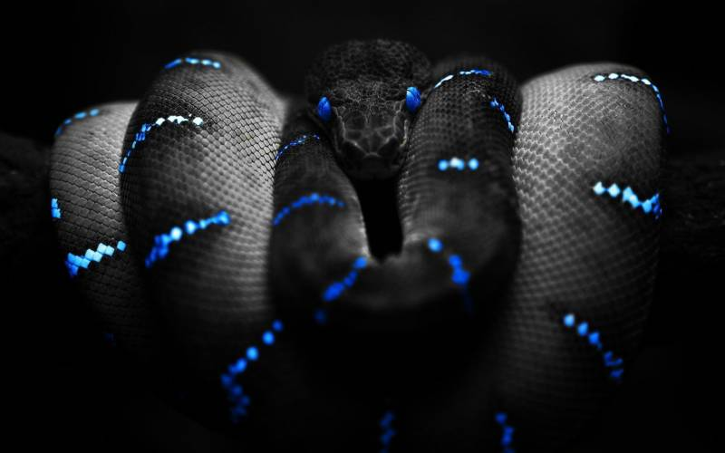 Serpent inquietant couleur bleue tuning corps du serpent entrelace